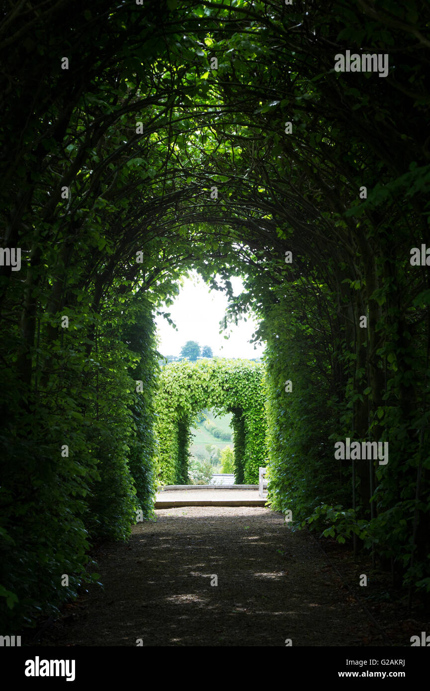 Beech tree tunnel at Broughton grange gardens. Broughton, Oxfordshire, England Stock Photo
