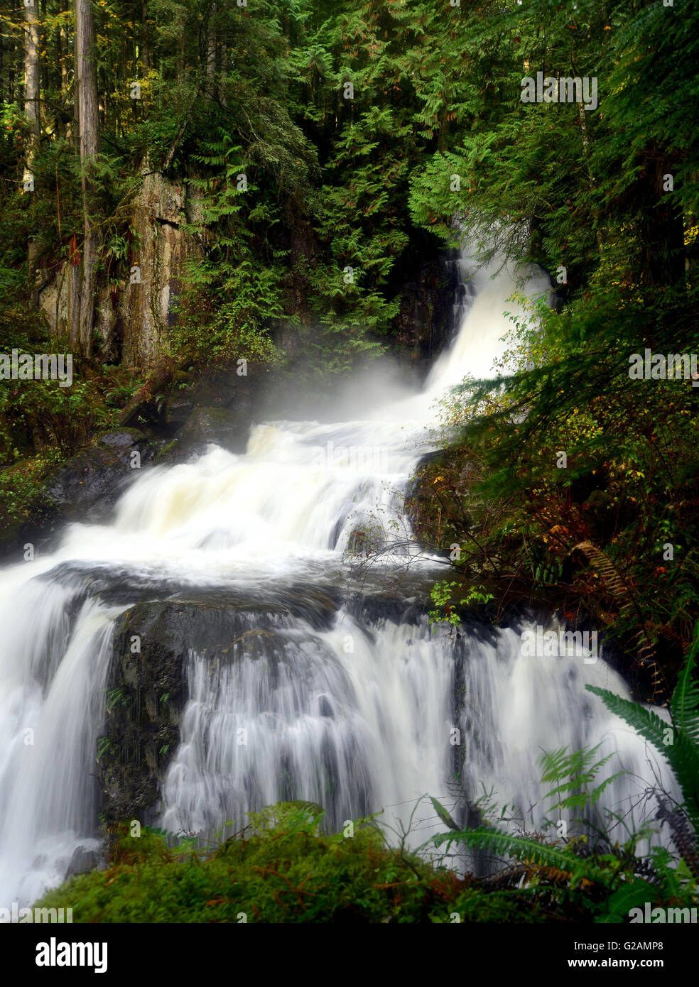 Steelhead  waterfalls in Steelhead Creek, Mission BC - Stock Image