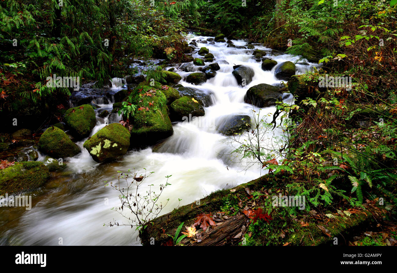 Waterflow in Steelhead Creek, Mission BC - Stock Image