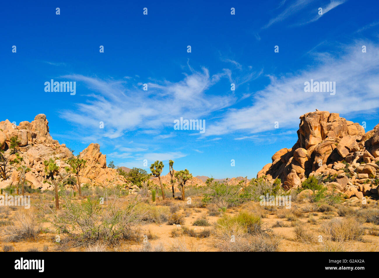 Joshua tree National park in South California's desert landscape on  a sunny hot day - Stock Image