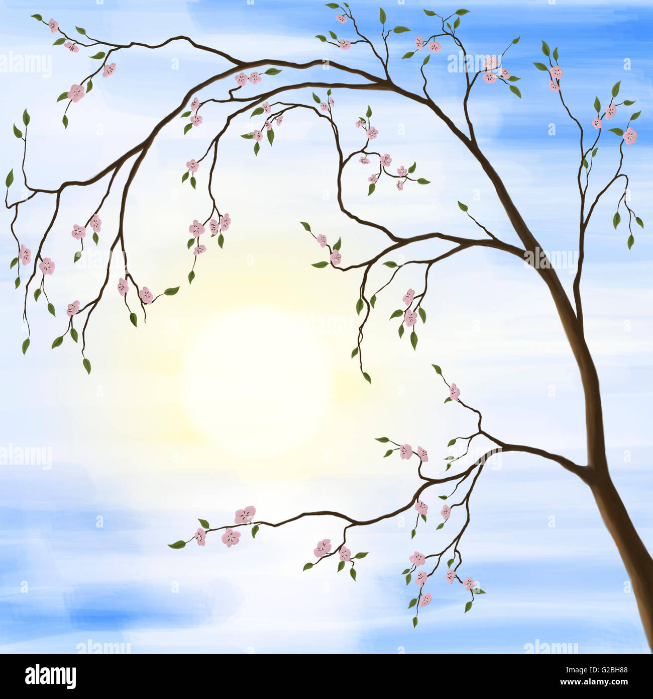 Sakura cherry blossom, illustration - Stock Image