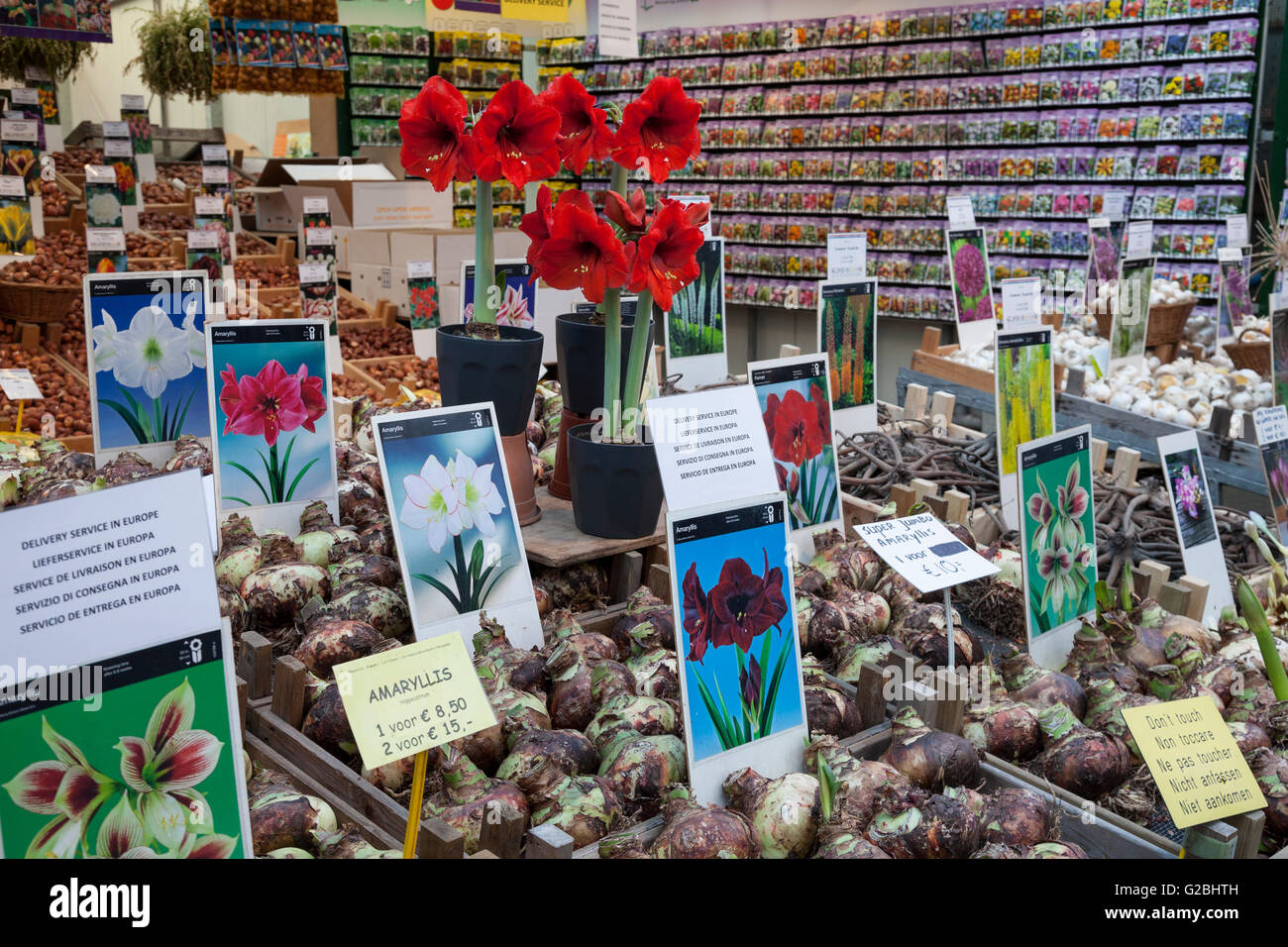Flower bulbs at the flower market, Amsterdam, North Holland province, Netherlands Stock Photo