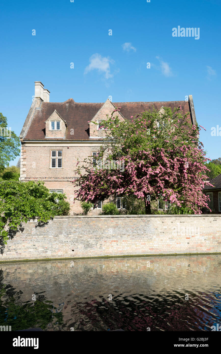 Magdalene College Cambridge UK with trees in blossom in the garden - Stock Image