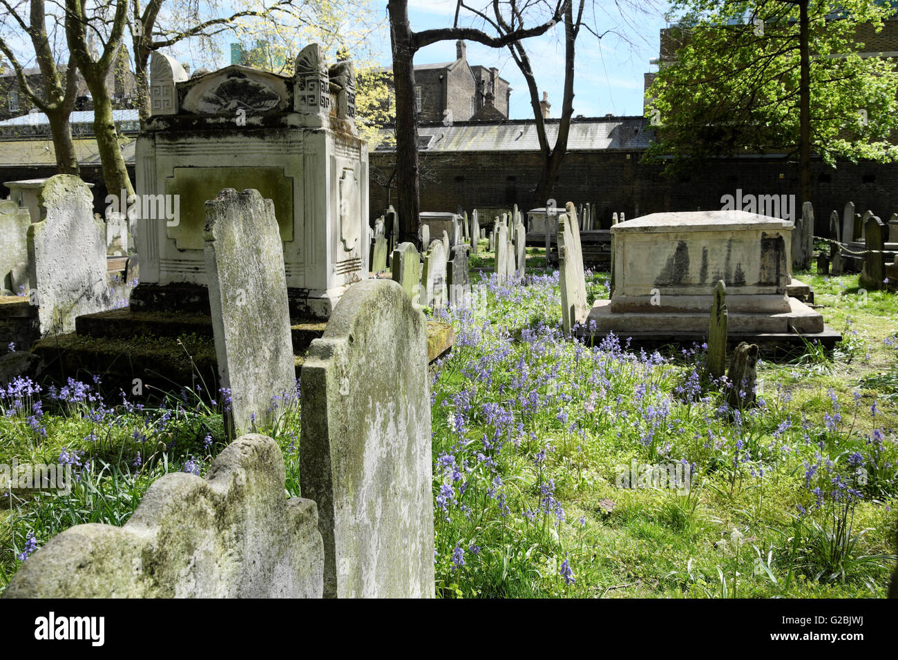 Graves tombstones and bluebells in spring graveyard in Bunhill Cemetery City of London EC1 UK  KATHY DEWITT - Stock Image