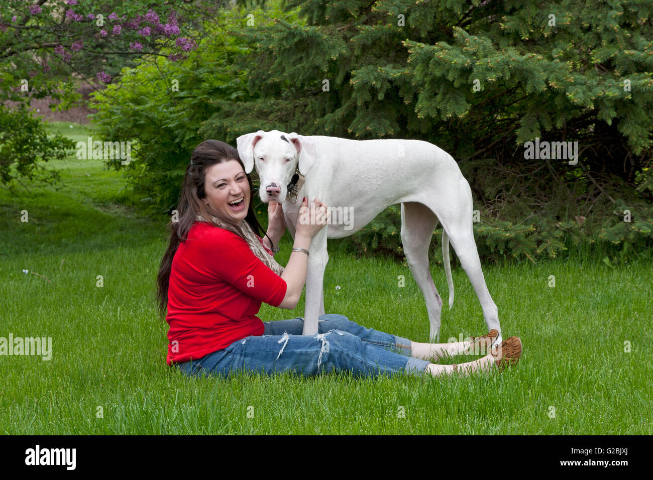 Girl in red laughs while petting big dog - Stock Image