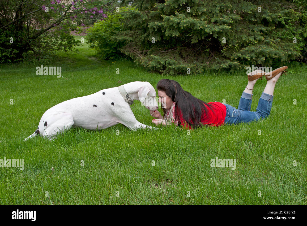 Woman in red bonds with big dog - Stock Image