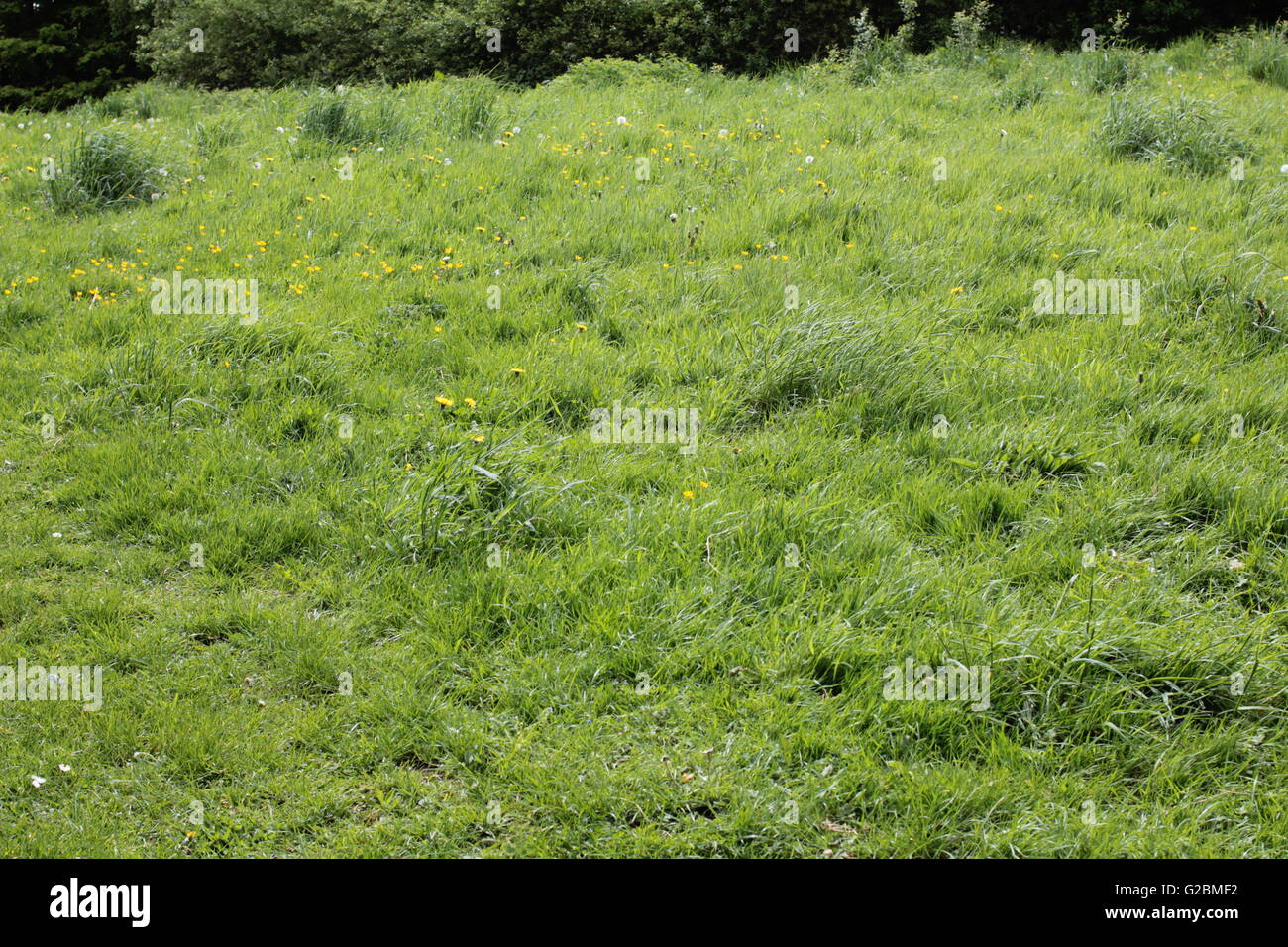 grass meadow land - Stock Image