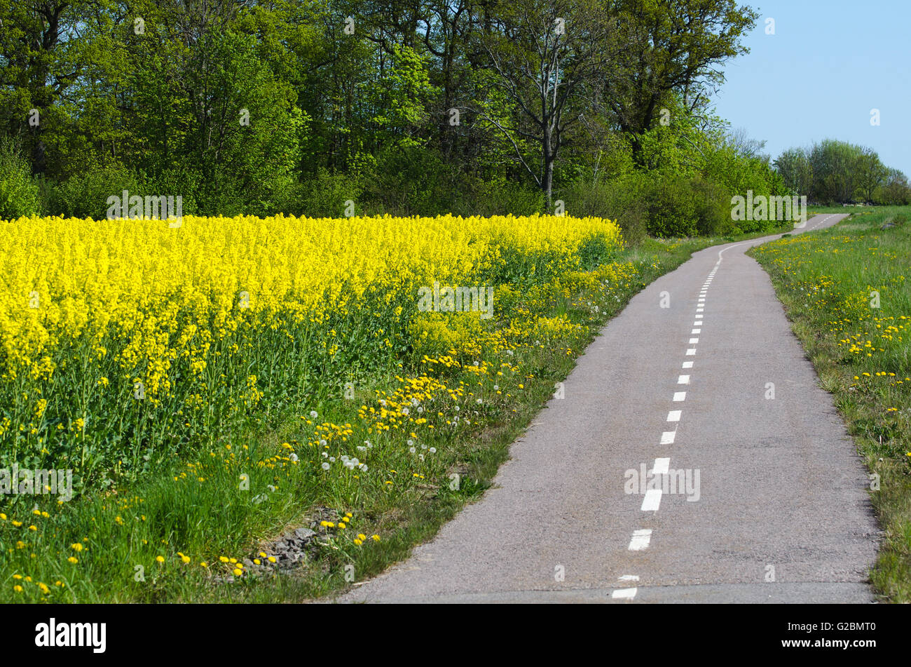 Cycleway in a spring colored landscape - Stock Image