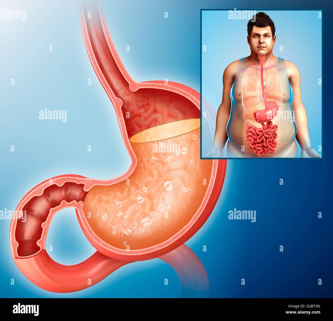 Human stomach acid, illustration.