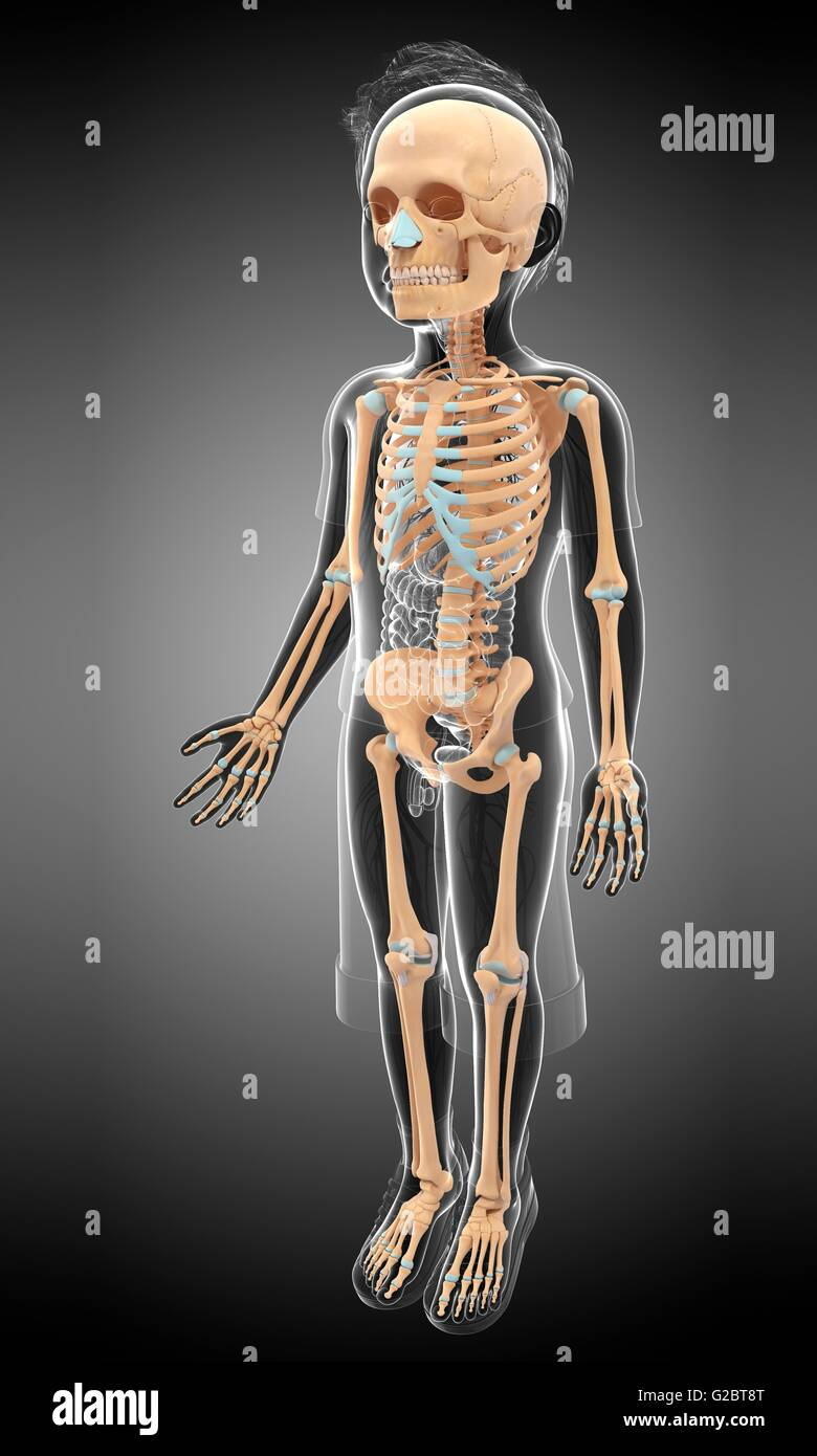 Skeletal System Of A Child Illustration Stock Photo 104752056 Alamy