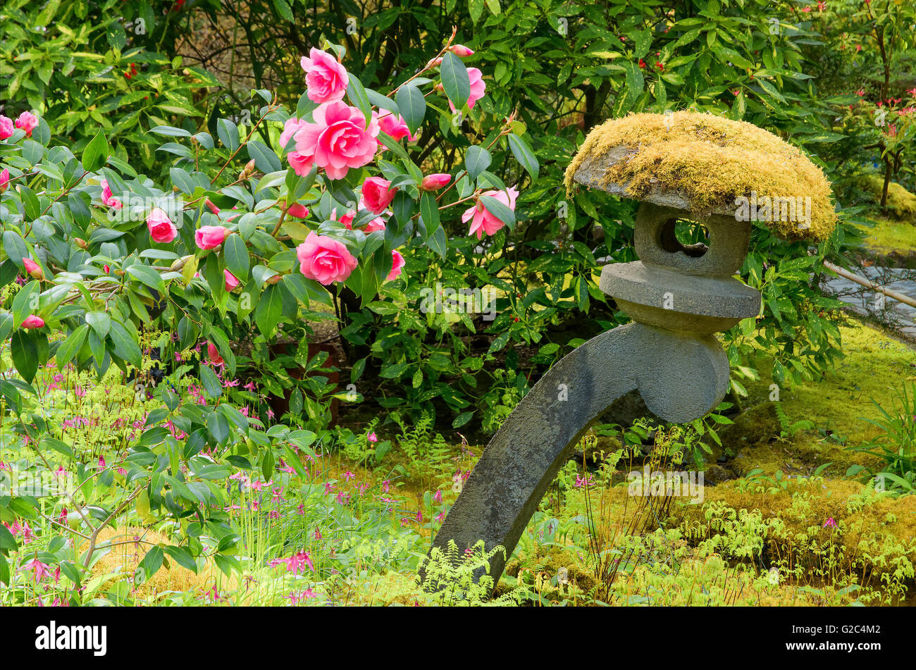 Camelia flowers and a Japanese stone lantern, the Japanese Garden,  Butchart Gardens, Brentwood Bay, Vancouver Island, - Stock Image
