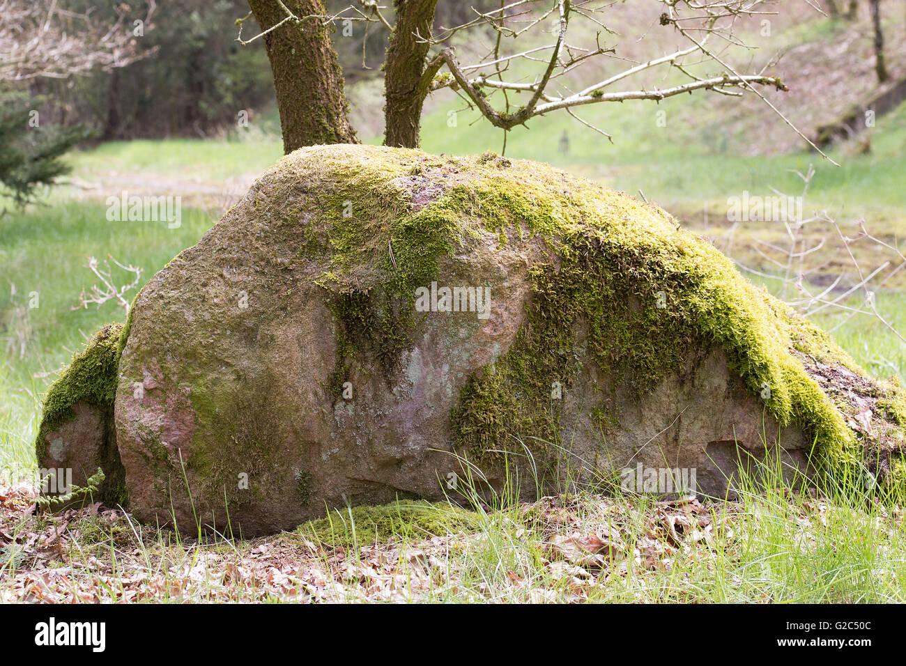 Großer Stein mit Moos bewachsen an einem Waldrand  Big stone overgrown with moss on a forest edge Stock Photo