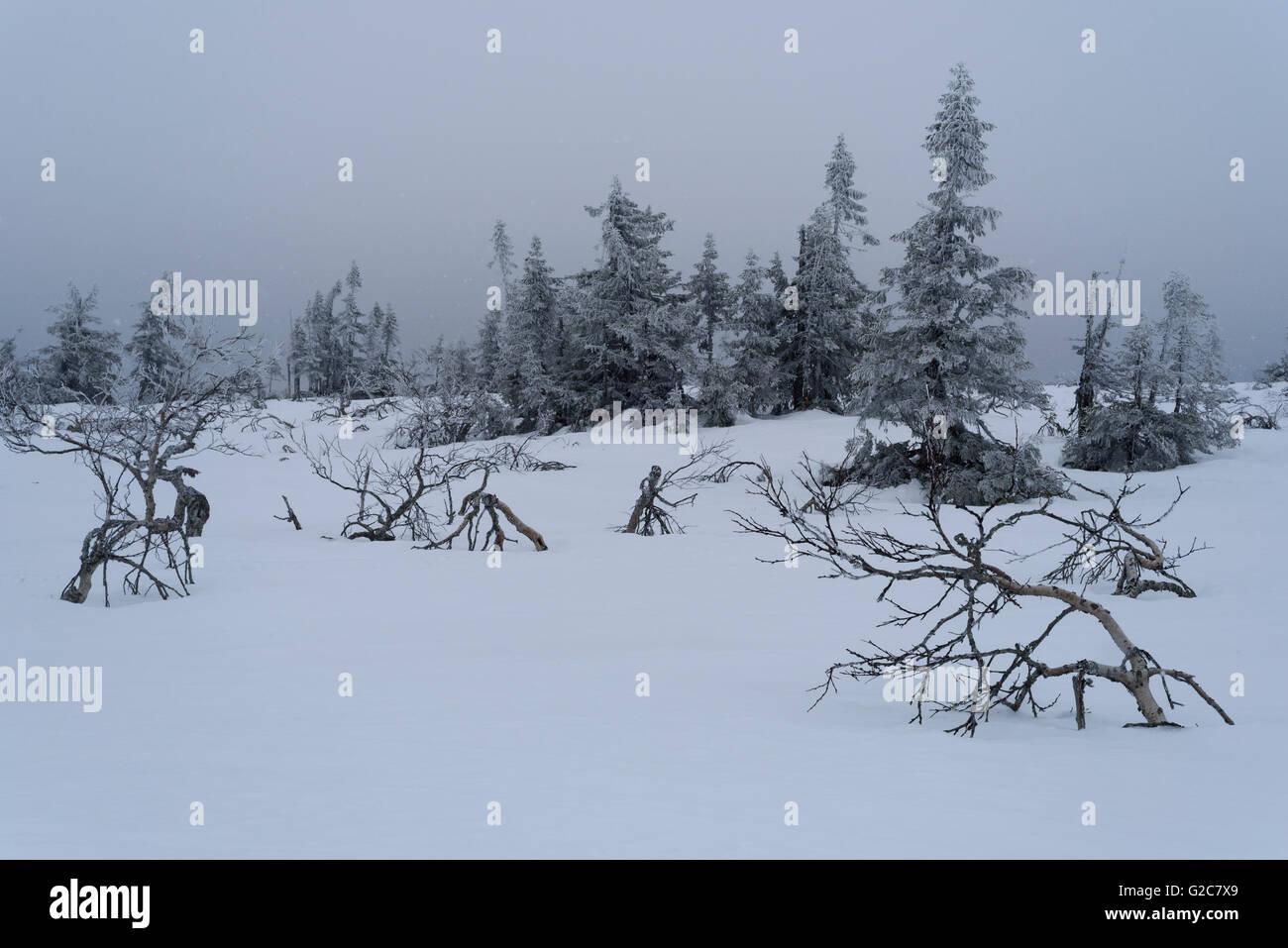 Snowy mountain landscape, Storfjällsgraven, Sälen, Dalarna, Sweden - Stock Image