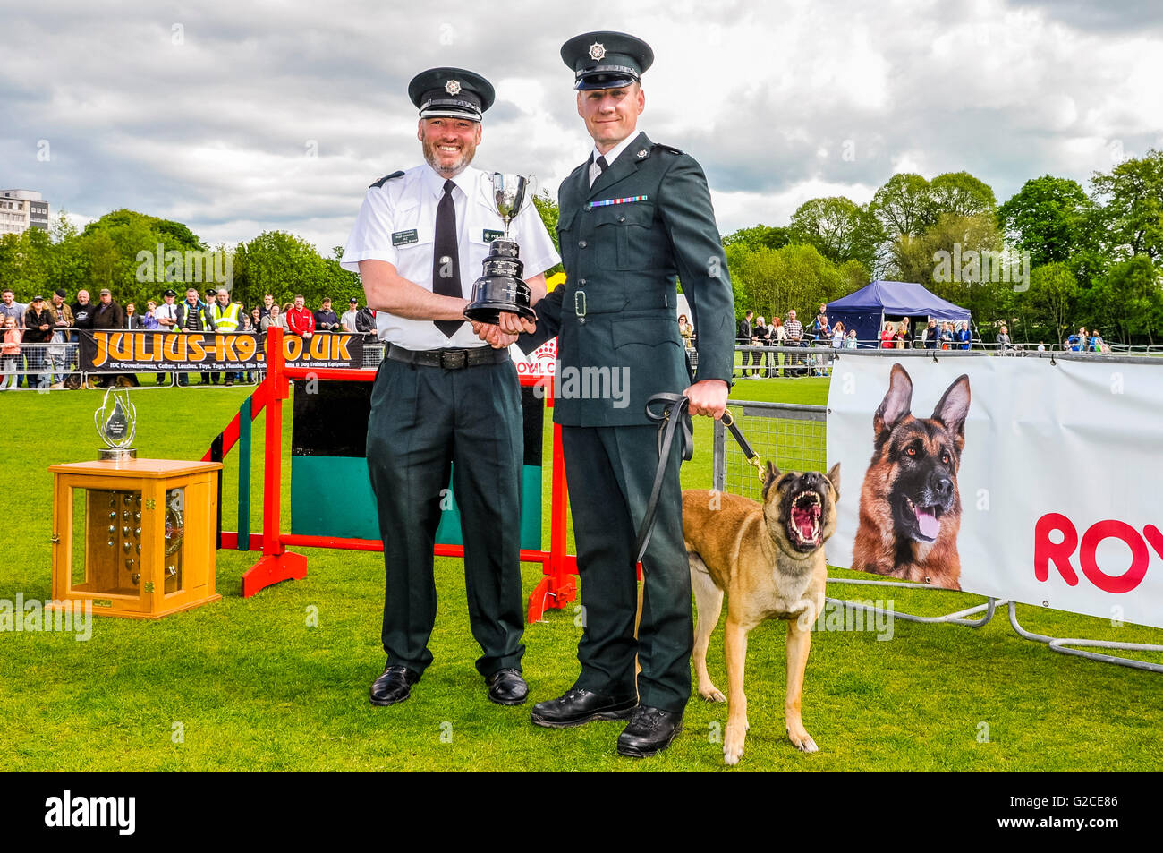BELFAST, NORTHERN IRELAND. 22 MAY 2016 - PD Finn from the PSNI, with his handler Constable Bradley, who was awarded - Stock Image
