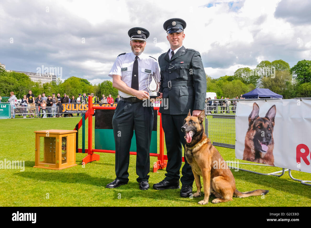 BELFAST, NORTHERN IRELAND. 22 MAY 2016 - PD Mike from the PSNI, with his handler Constable McCrea, is declared overall - Stock Image