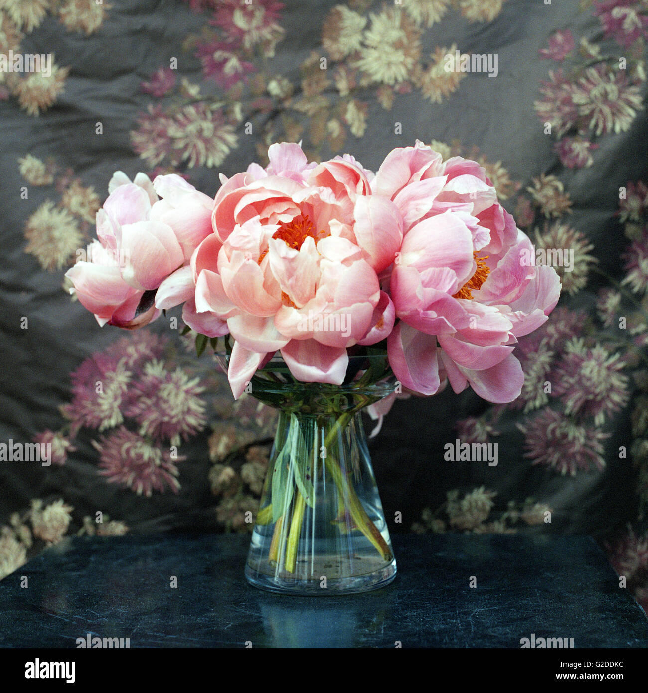 Peonies in Glass Vase - Stock Image