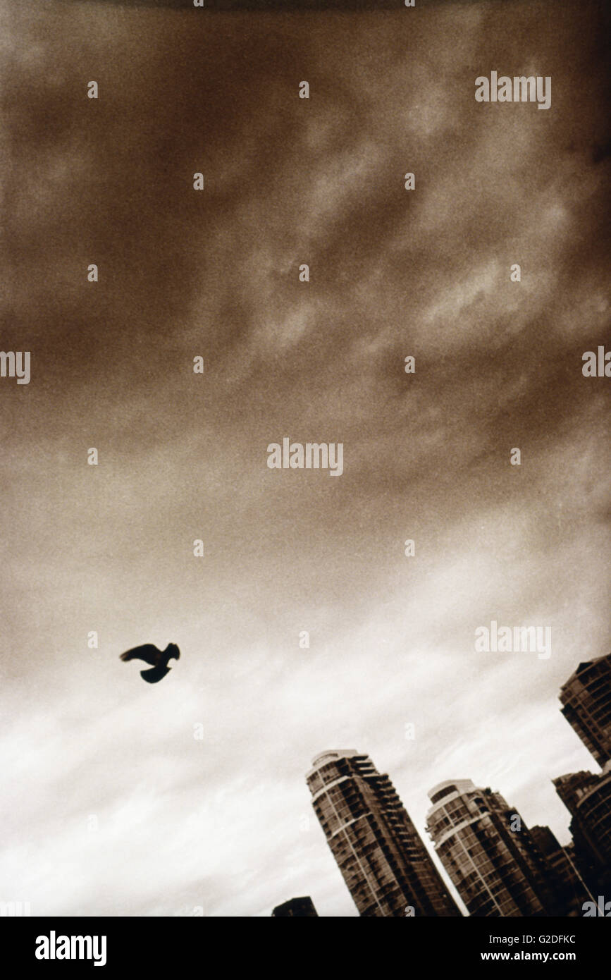 Bird Flying Above Cloudy City - Stock Image