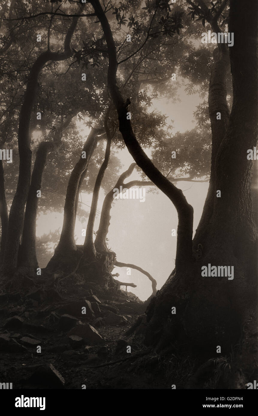 Fog With Mystical Tree Branches - Stock Image