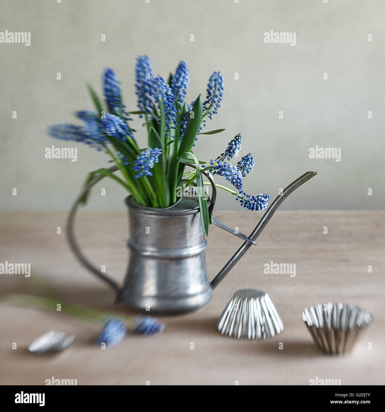 Still life with grape hyacinths arranged in an antique watering can with old moulds on a rustic wooden kitchen table - Stock Image
