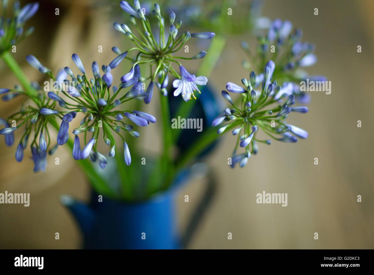 Stilleben mit blauen Zwiebelblüten in Retro - Kaffeekanne Stock Photo