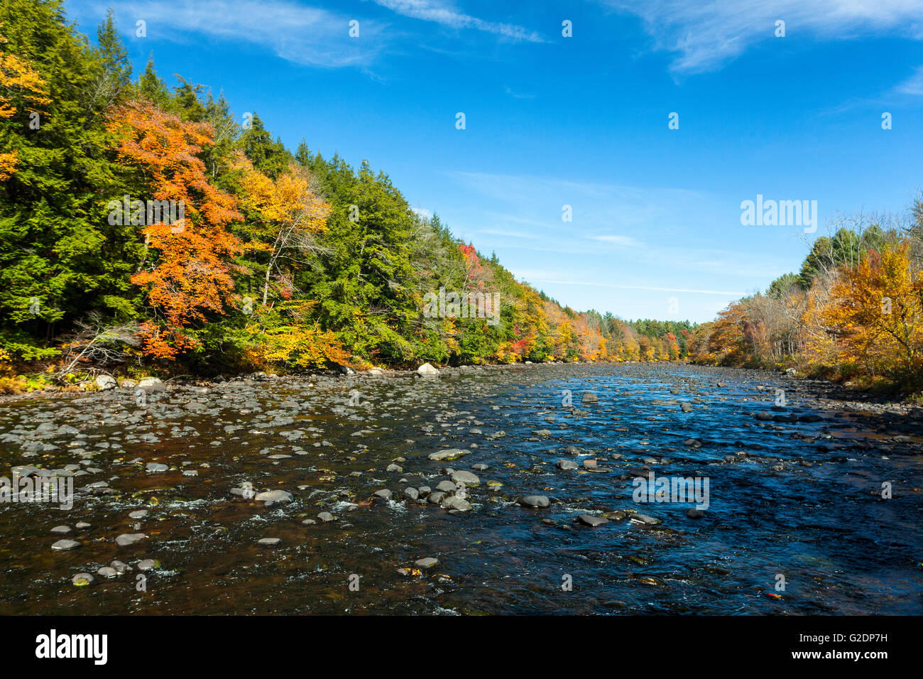 Trees in fall on Sacandaga River, Adirondack Mountains, Wells, New York, United States - Stock Image