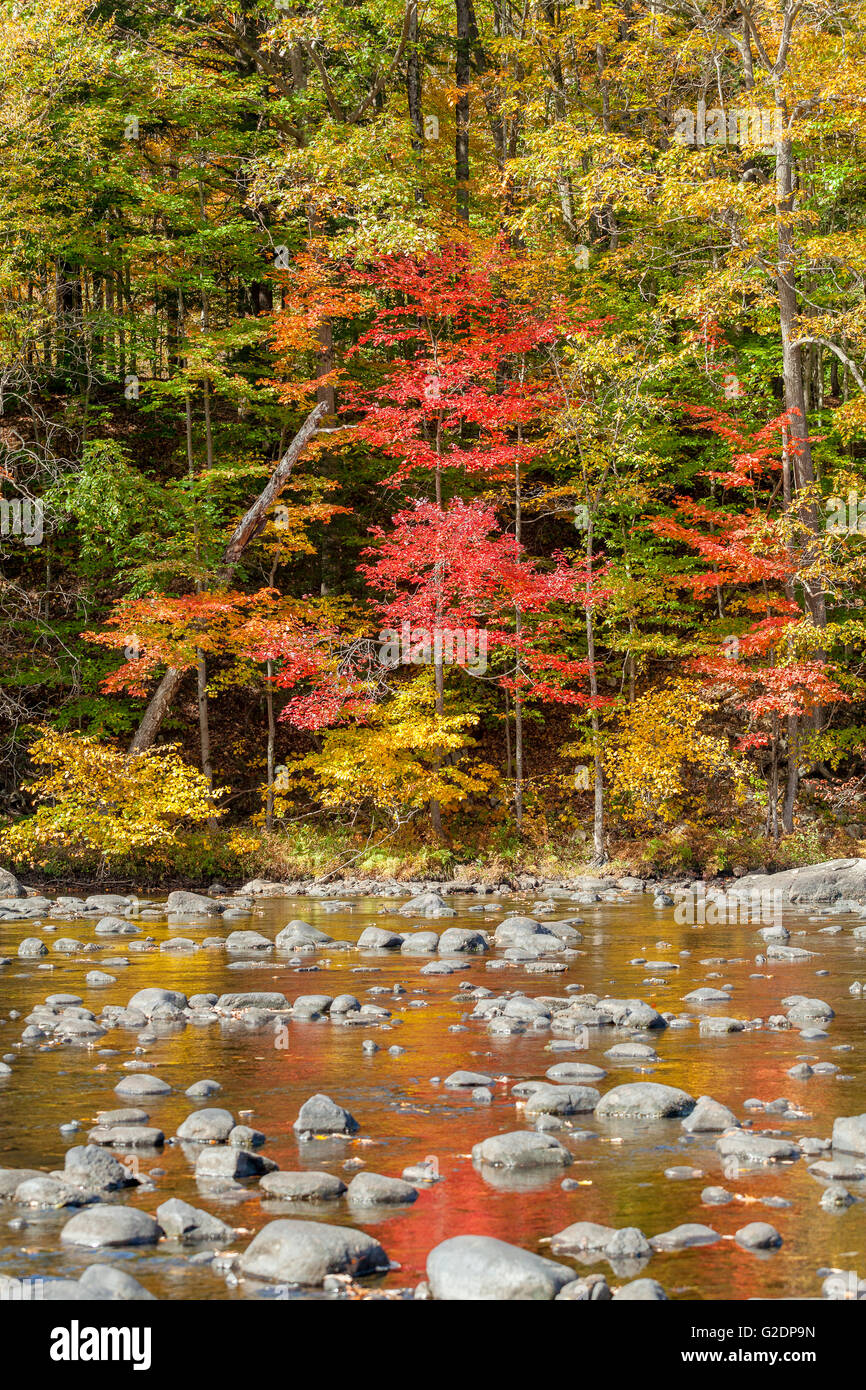 Autumn Leaves on Sacandaga River, Adirondack Mountains, Wells, New York, United States - Stock Image