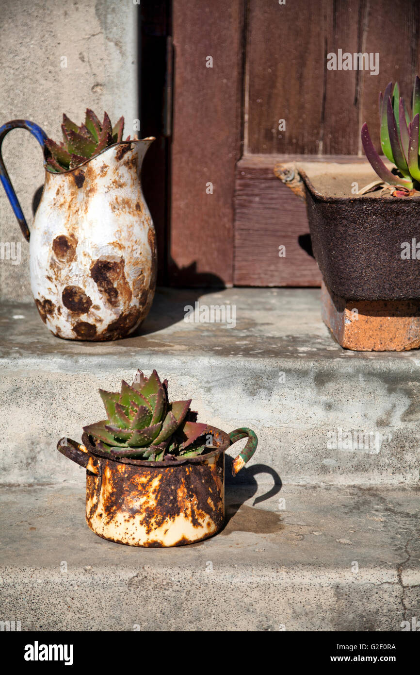 Rusted Potted Succulents on Namib Doorstep - Stock Image