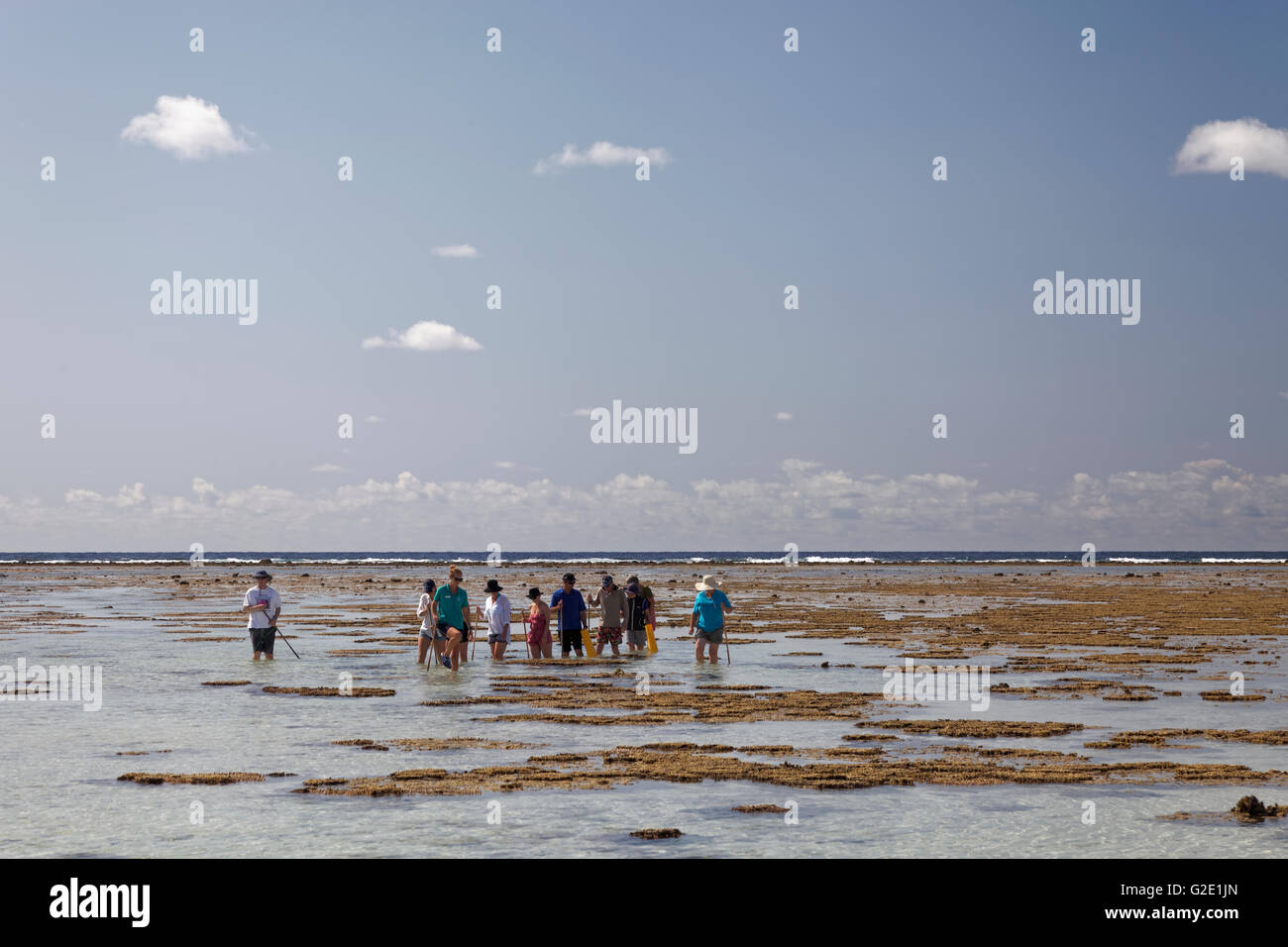 Tourists observe animals in rockpools, at low tide on reef top, Lady Elliot Island, Queensland, Pacific, Australia - Stock Image