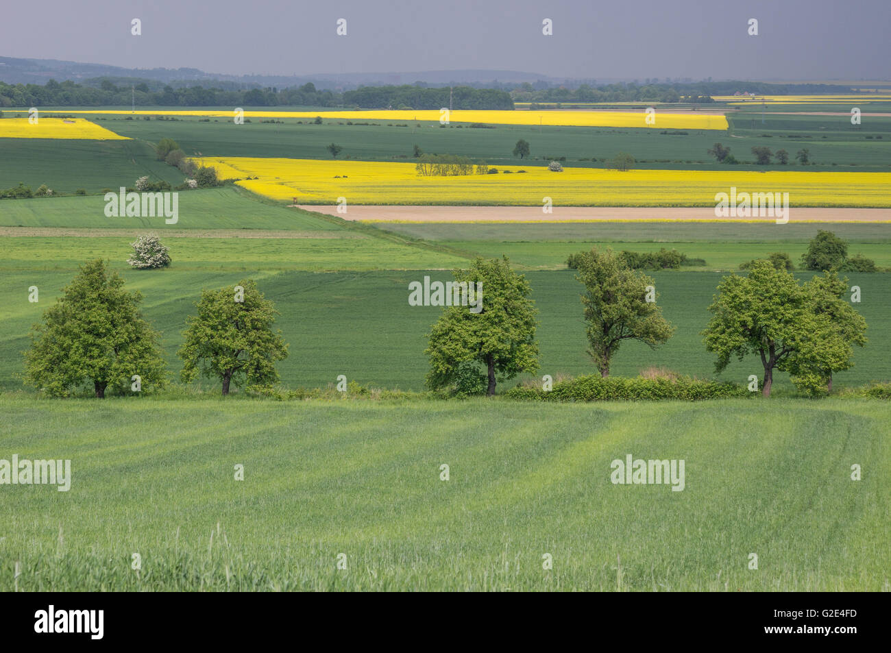 Hilly undulated germinating colorful spring fields Lower Silesia Poland - Stock Image