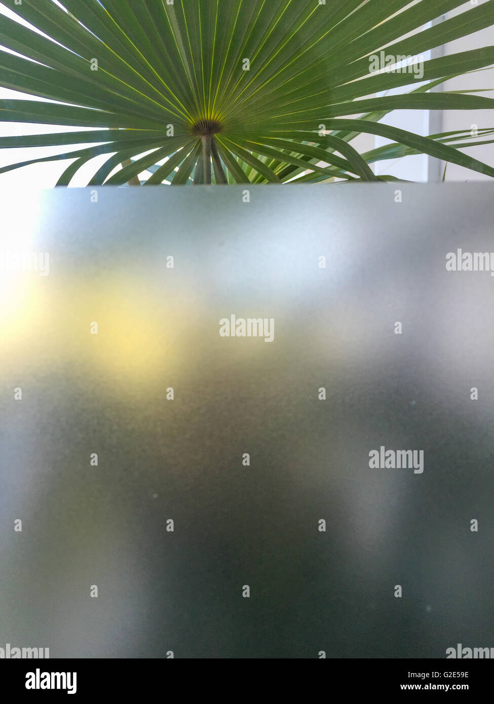 window with both an opaque and clear area and a plant beyond - Stock Image