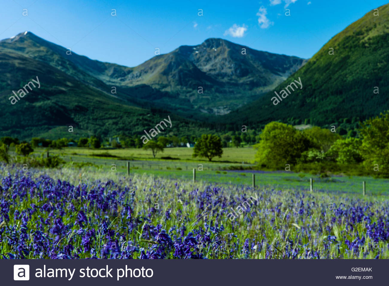 North Ballachulish, Fort William, Scotland, UK. 30th May 2016. Looking east across a landscape of bluebells and - Stock Image