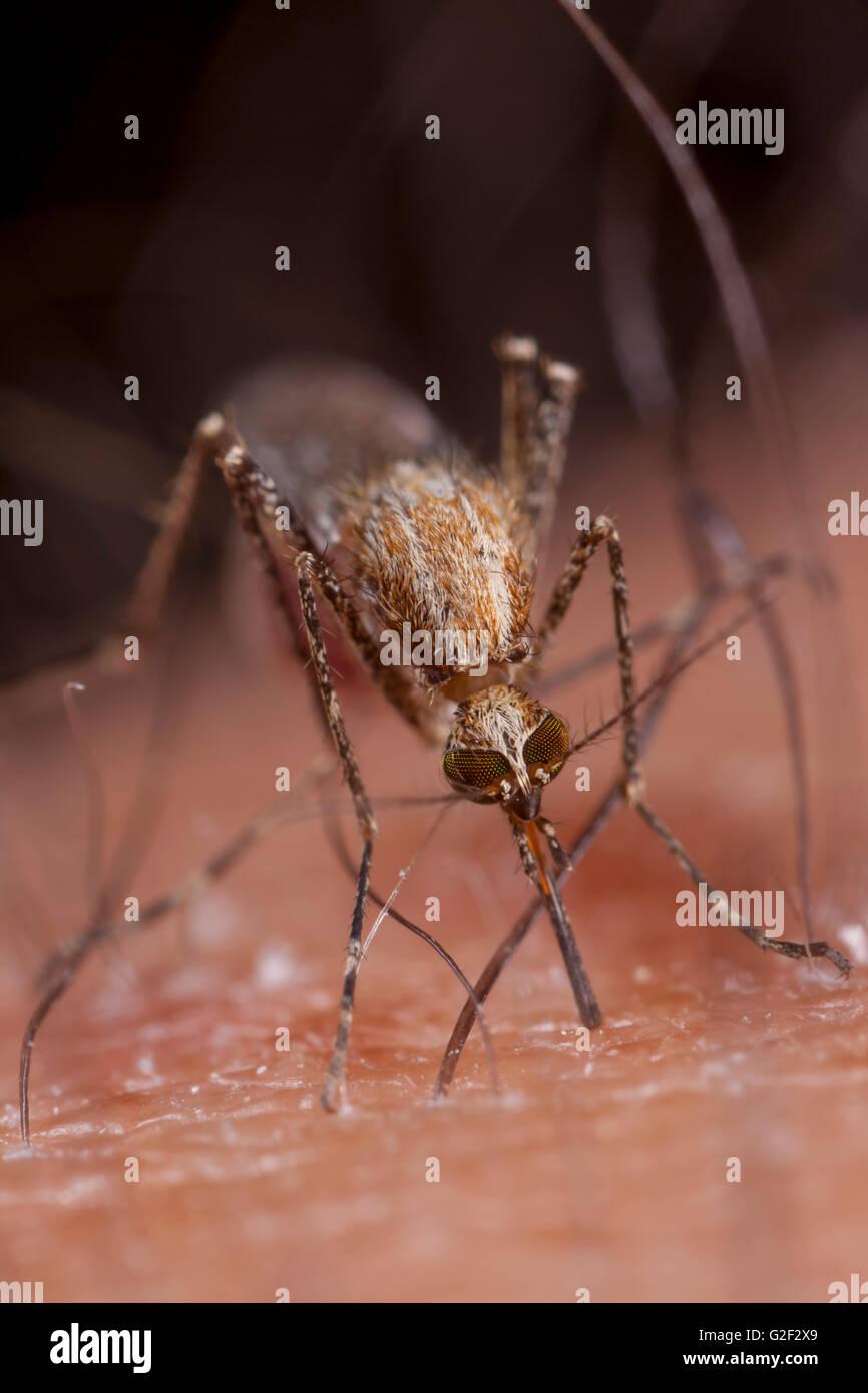 Mosquito beating. - Stock Image