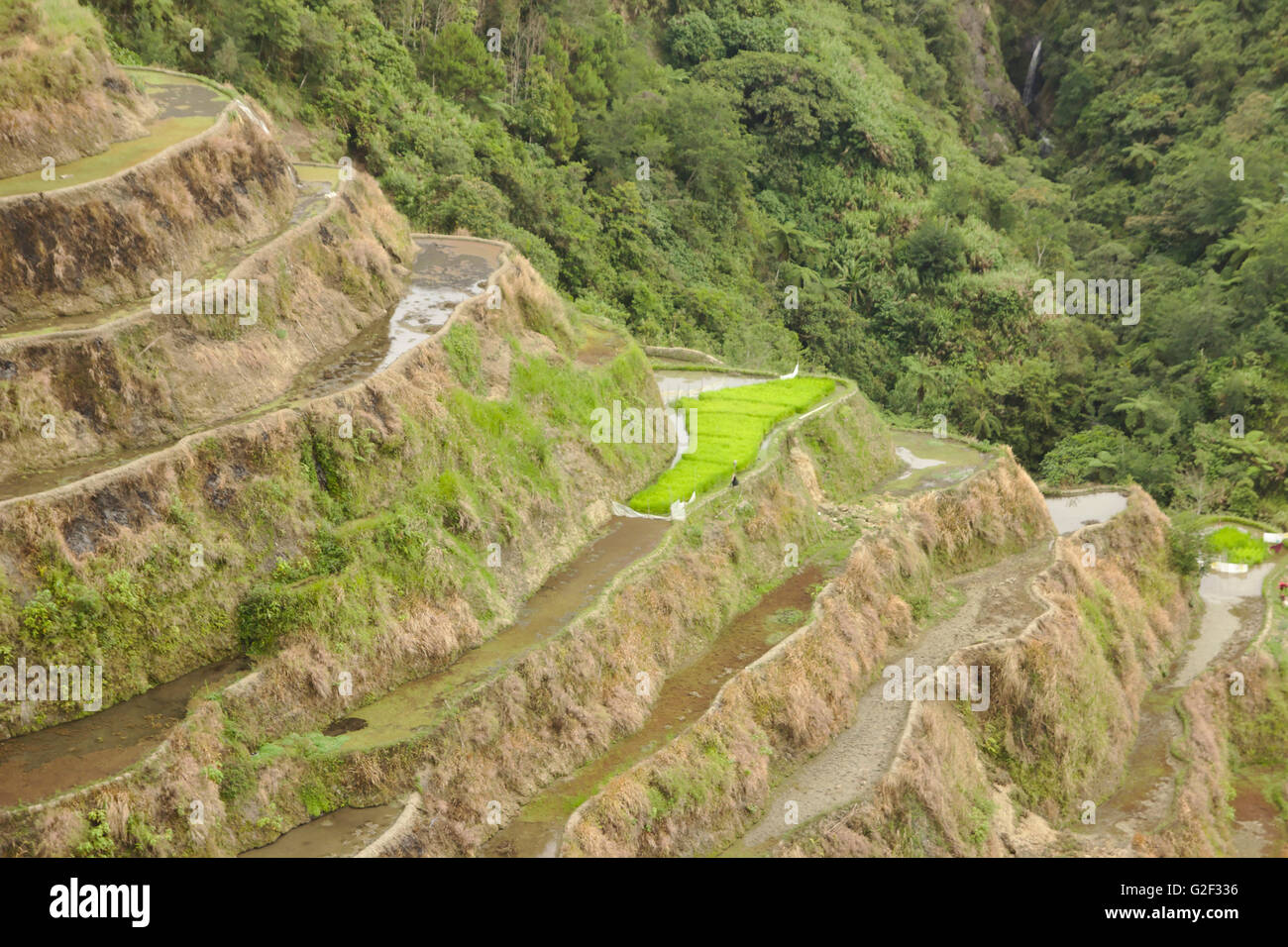 Ifugao rice terraces from Banaue viewpoint in April, northern Luzon, Philippines - Stock Image