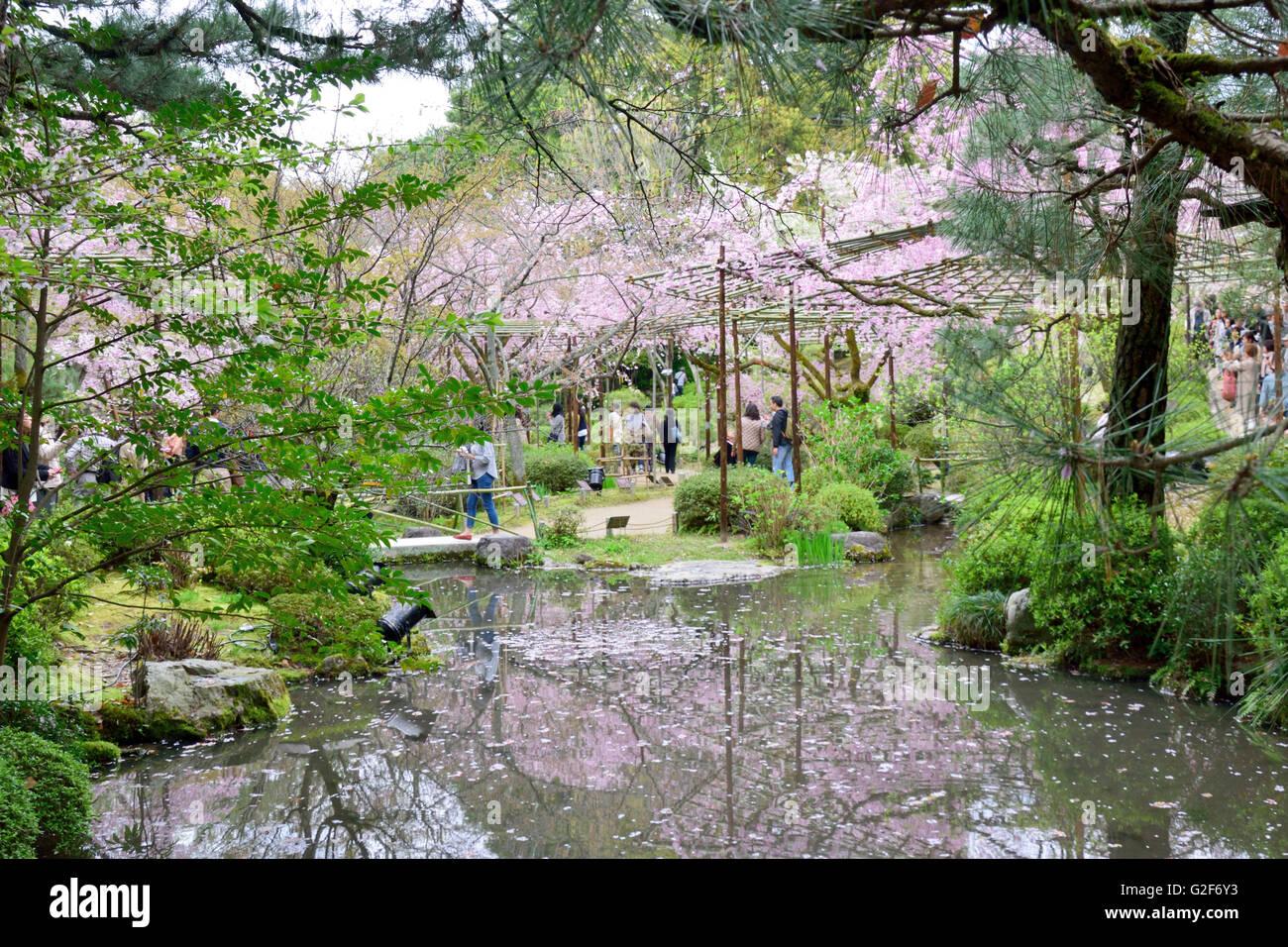 Cherry Blossom, Heian Shrine Gardens Stock Photo