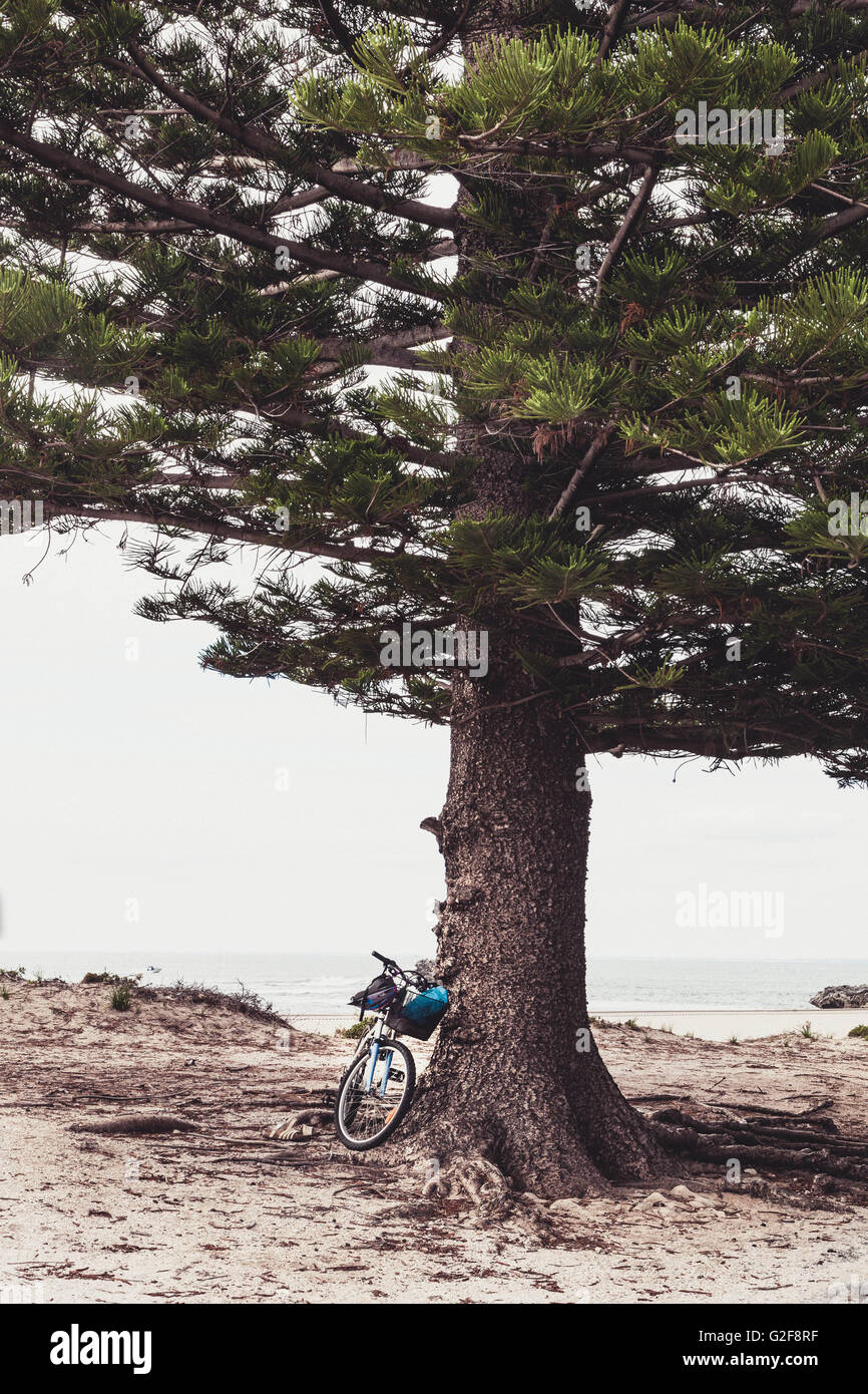 bicycle parked resting against a pine tree near the beach. - Stock Image