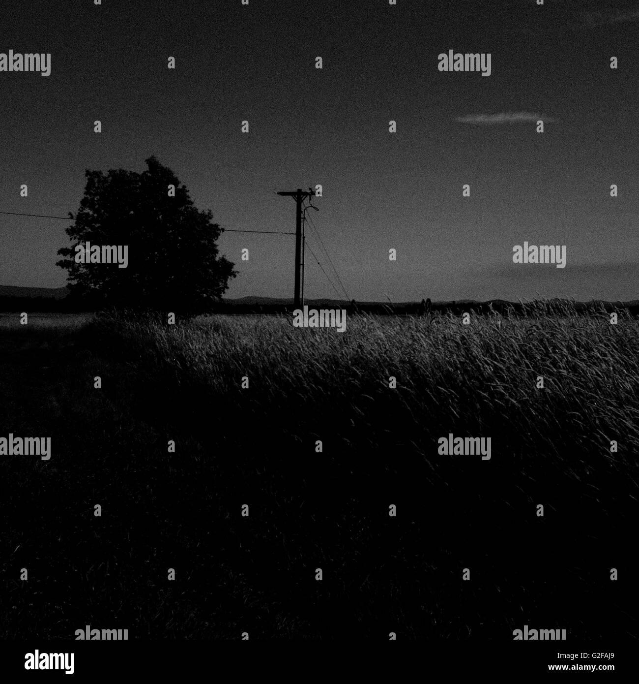 Wheat Field at Night, Washiginton, USA - Stock Image