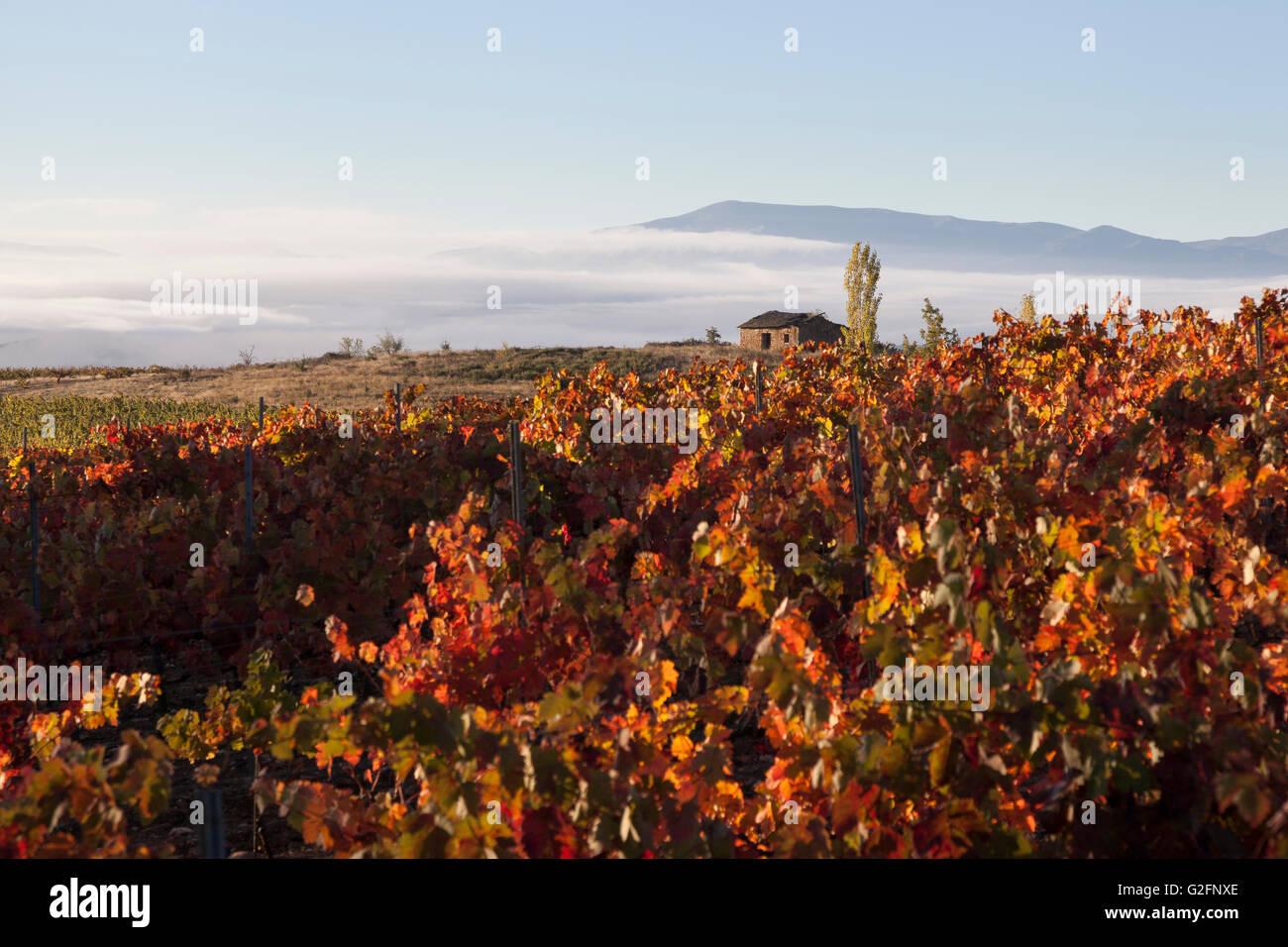 Villafranca del Bierzo, Spain: Vineyards with a rustic shelter along the Camino Francés. - Stock Image