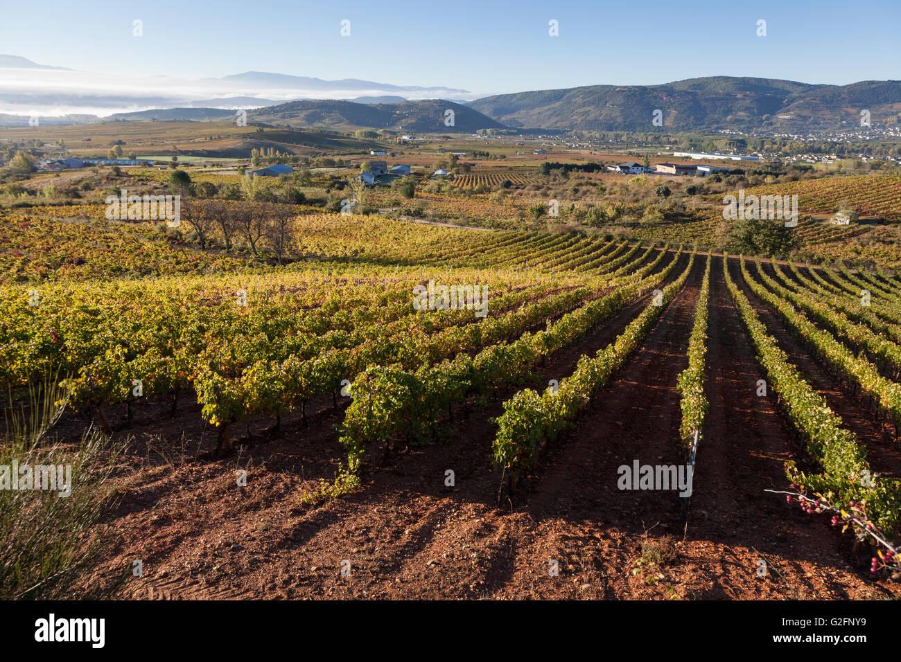 Villafranca del Bierzo, Spain: Vineyards along the Camino Francés. - Stock Image