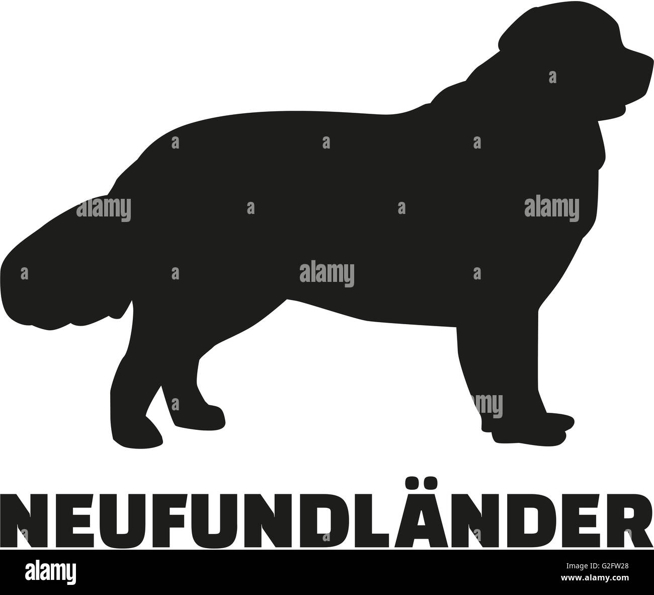 Newfoundland with german breed name - Stock Image