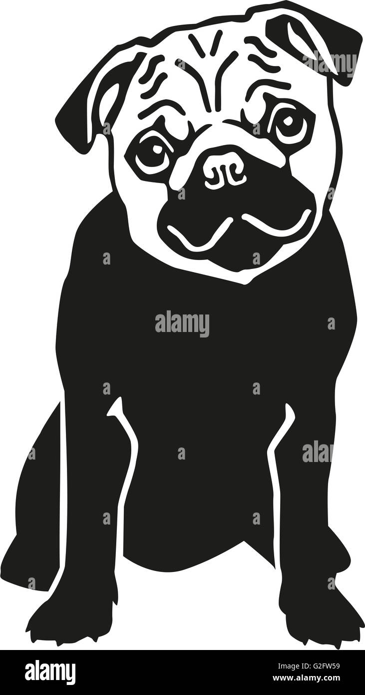 Pug dog sitting - Stock Image