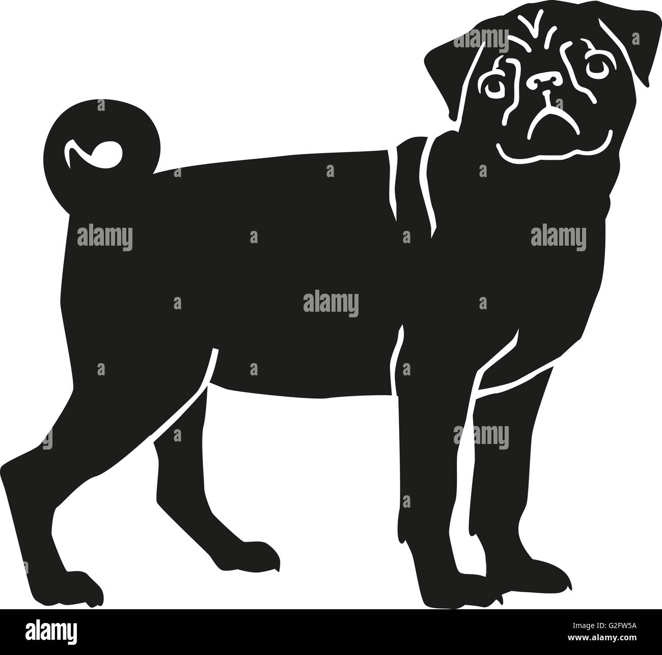 Cute pug - Stock Image