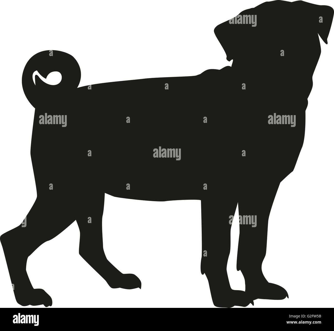 Pug dog - Stock Image