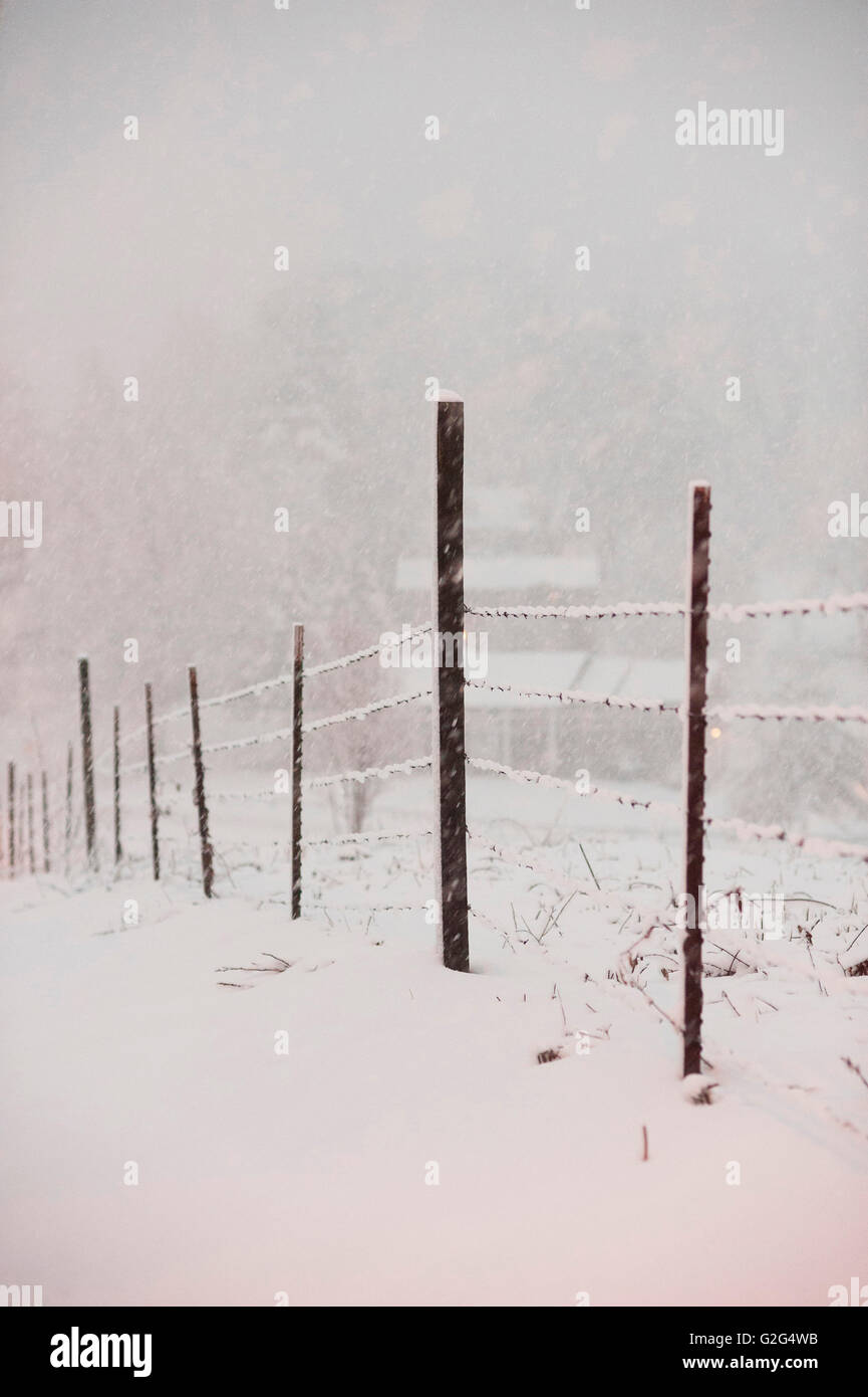 Snowy Barbed Wire Fence in Winter - Stock Image