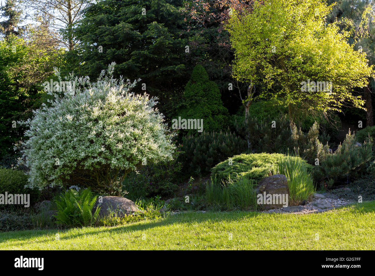 Beautiful Spring Garden Design With Conifer Trees Green Grass And Stock Photo Alamy