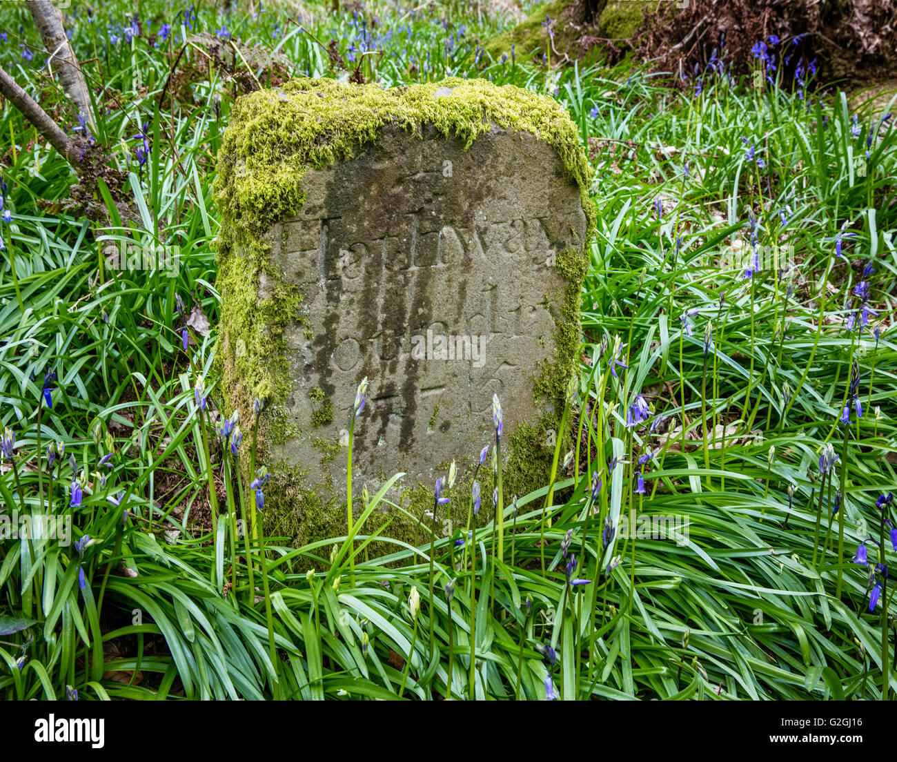 Moss covered Hathway Boundary stone with the date 1775 in a Somerset bluebell wood UK - Stock Image