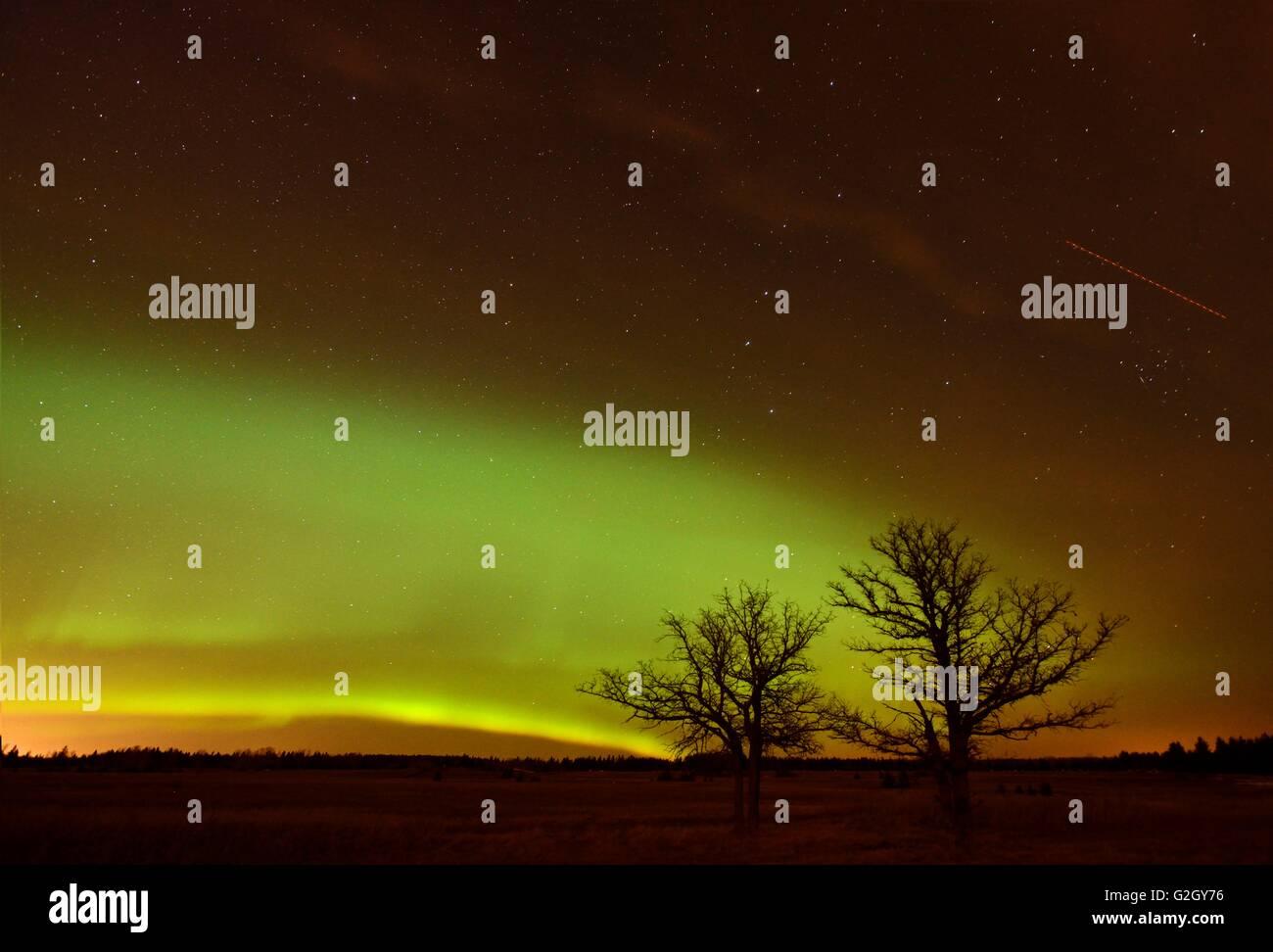 Northern lights (Aurora borealis) and bur oak trees Birds Hill Provincial Park Manitoba Canada - Stock Image