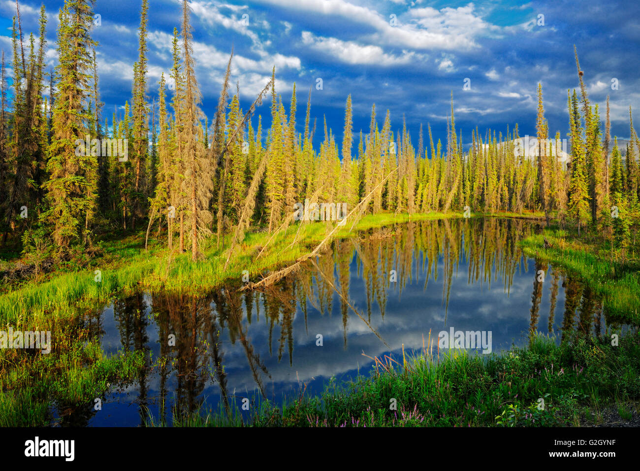 Wetland on the Dempster Highway (KM 210 - 215) Dempster Highway Yukon Canada - Stock Image