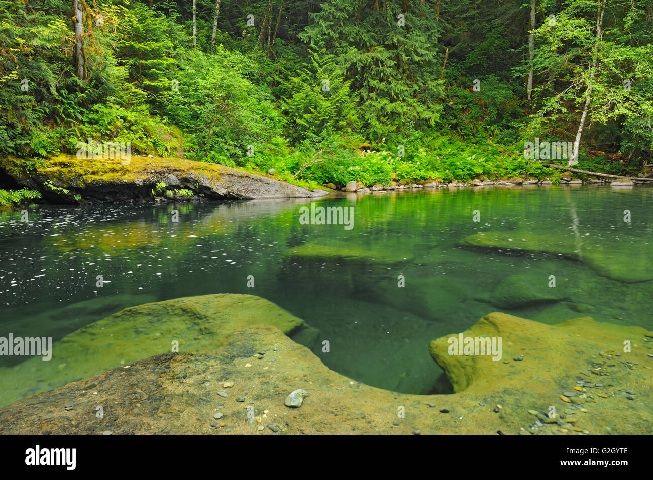 Quiet pool in the Englishman River , Englishman River Falls Provincial Park British Columbia Canada - Stock Image
