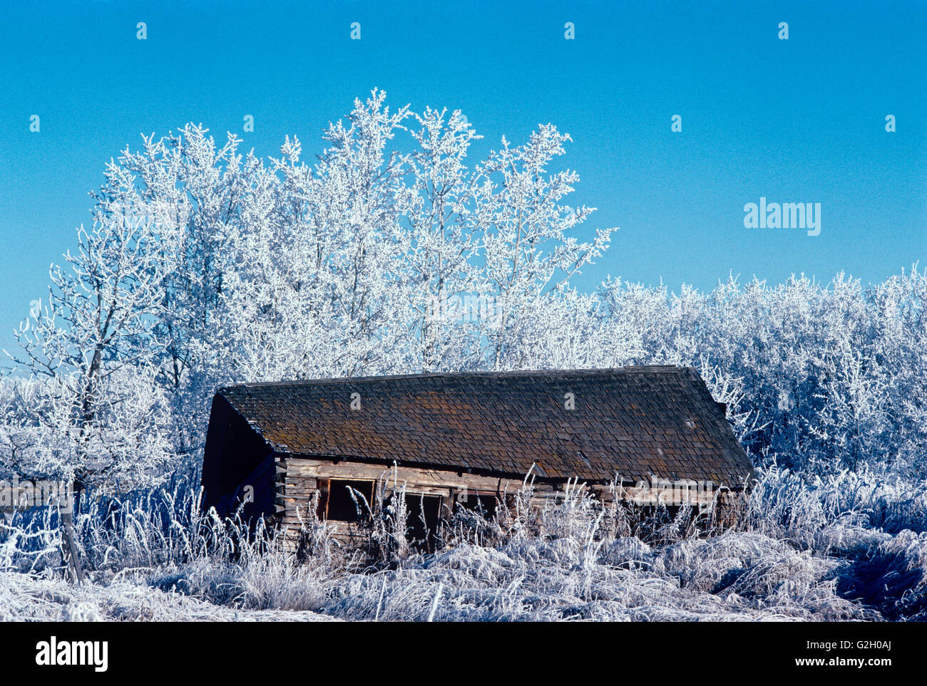 Homestead in hoarfrost Stony Plain Alberta Canada - Stock Image