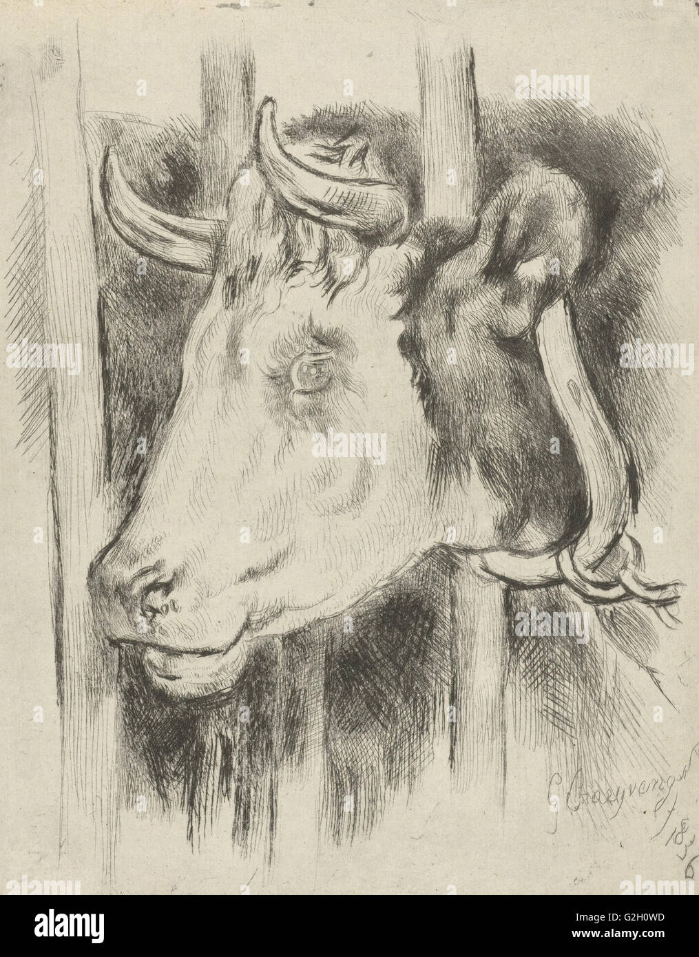 Head of a cow, print maker: Gijsbertus Craeyvanger, 1836 - Stock Image